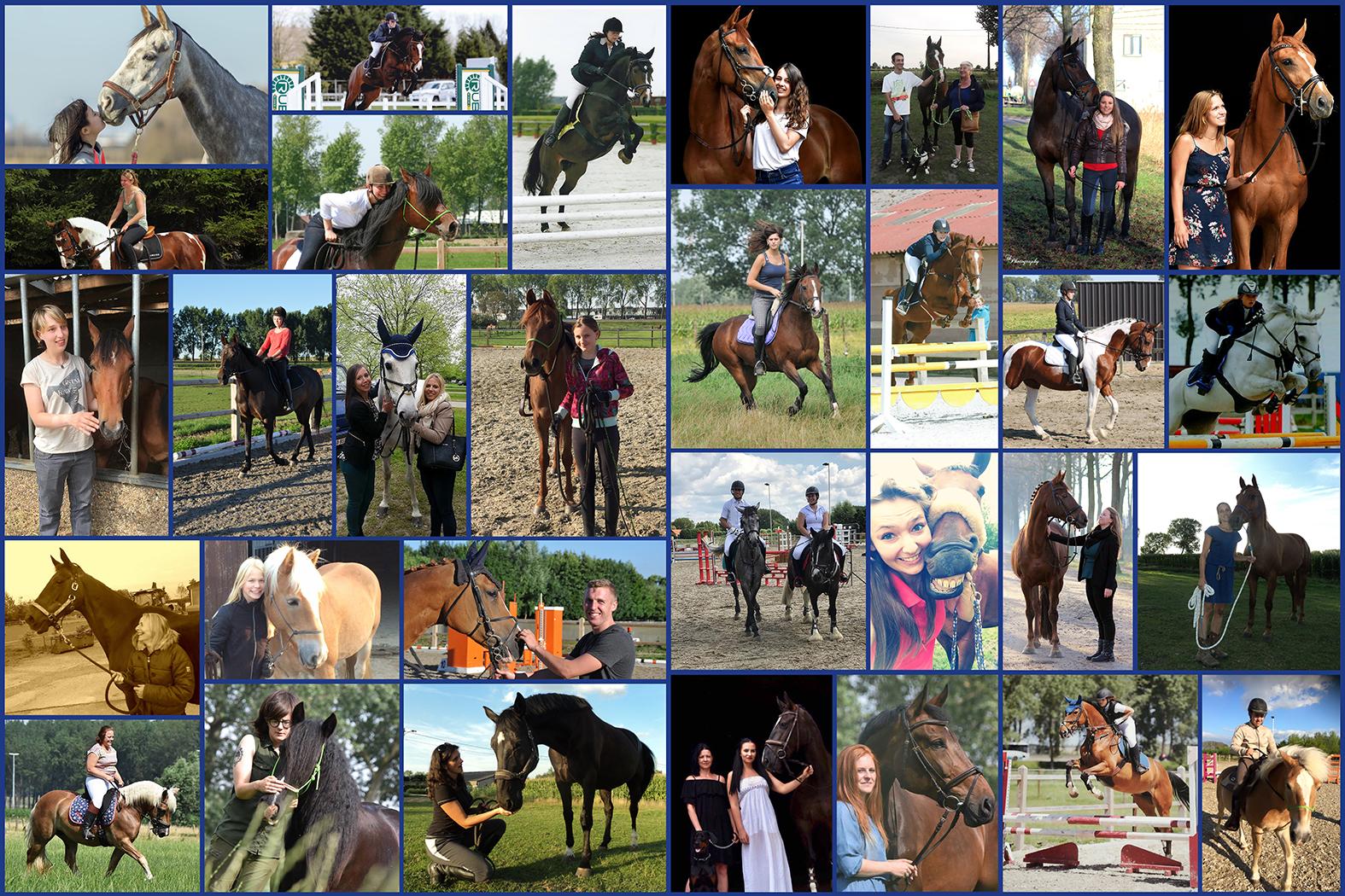 collage paarden