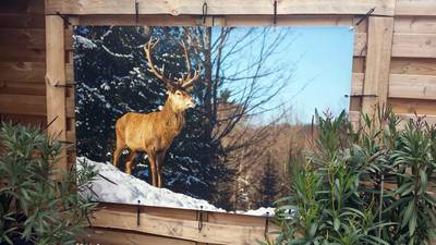 Tuinposter 125x500 cm